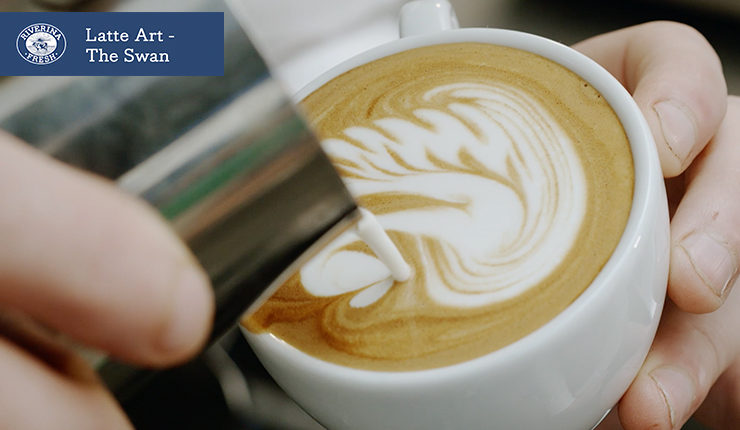 The latte art- the swan